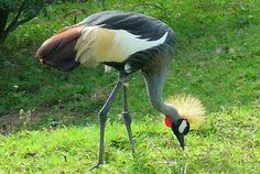 Uganda Birding Safari - Rate: From US$827.00 per person sharing for 6 Nights