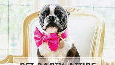 For You | For Them: The Perfect Pet Party Attire