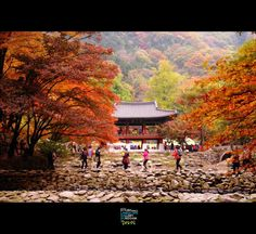 falling in korea  beautiful korea  Bekyangsa  the name of temple in korea  www.youism.co.kr