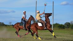 Gathering with all the top Polocrosse players at Antelope Park. A weekend with speed and adrenalin! Polo Club, Santa Barbara, Horses, Park, Animals, Top, Animales, Animaux, City Of Santa Barbara