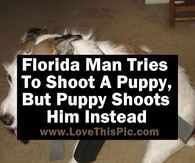 Florida Man Tries To Shoot A Puppy, But Puppy Shoots Him Instead
