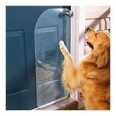 Genius Hacks That Make Having A Dog So Much Easier If your dog scratches the door to go out, use a door protector to minimize damages.If your dog scratches the door to go out, use a door protector to minimize damages. Animals And Pets, Cute Animals, Wild Animals, Pet Door, Doggy Doors, Dog Rooms, Golden Retriever, Dog Houses, House Dog
