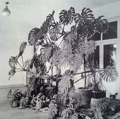 Henri Matisse's Studio, 1948 I want to live in one place long enough that plants have time to go wild
