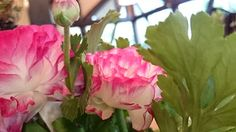 お店を彩るお花 (#^。^#) - コレクション - Google+