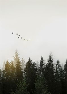 Digitally altered images of a foggy Swedish forest landscape in dawn with flock of birds flying over the trees.Created from multiple images added together in Photoshop and edited in Lightroom Photography Beach, Forest Photography, Landscape Photography Tips, Amazing Photography, Travel Photography, Photography Backdrops, Photography Lighting, Photography Business, Photography Composition