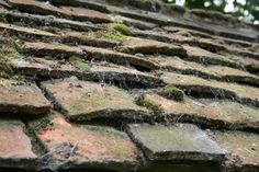 Terracotta tiles covered in moss and lichens.