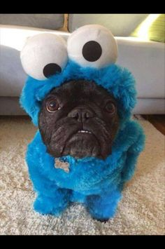 "Friend's 3 year old saw this photo and freaked out: ""What does Cookie Monster have in his mouth?!"" - Imgur"