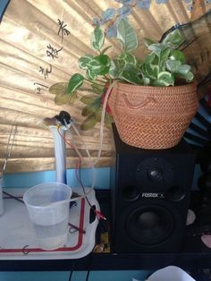 Picture of Automatically water your small indoor plant using Arduino + pump. Instructions on Instructables site.