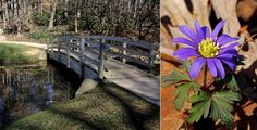 Todd Slaubaugh with his bridge landscape photo, and Lynn Whitmore with her wood anemone photo, were tie winners for the March Photo Contest. Congratulations to both photographers!