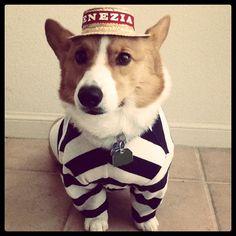 Cute pup in cute clothing