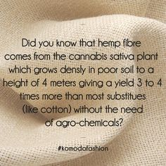 Hemp Fibre #naturalfibers #bastfiber #textiles #fabric #organicfabric #sustainablefabrics #Fibers #Hemp Sustainable Clothing, Sustainable Fashion, Sustainable Textiles, Hemp Fabric, Cannabis, Marijuana Facts, Sustainability, Fun Facts, Environmentalism