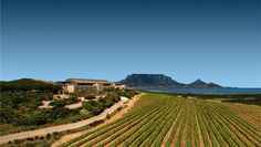 We know you love Cape Town but there's no reason to always do the same touristy things when visiting.On the other hand, if you are lucky enough to live in one of the most beautiful cities in the wor
