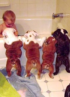 How many Puppies does it take to give a baby a bath?  4!!!  :)
