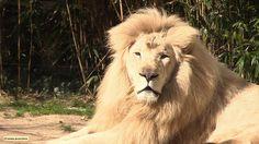 une saison au zoo. le prime. feb. 17th 2015. 20h50 (19:50 gmt). france 4