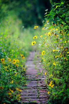 Ideas For Summer Nature Photography Country Paths