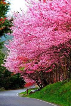 Beautiful Spring Time, I love the flowering trees! Trees And Shrubs, Flowering Trees, Blooming Trees, Beautiful World, Beautiful Places, Beautiful Pictures, Blossom Trees, Cherry Blossoms, Spring Blossom