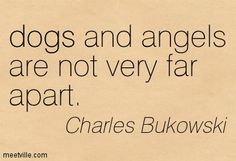 dogs and angels are not very far apart. Charles Bukowski.