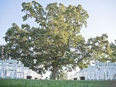Front Porch Farms Charlotte Tennessee Wedding Venues 3