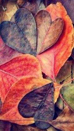 ハート型の落ち葉 | スマホ壁紙/iPhone待受画像ギャラリー もっと見る