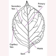 botanical leaf line drawings - Bing images Drawing Skills, Line Drawing, Online Art Classes, Easter Candy, Paper Quilling, Learn To Draw, Art Tutorials, Memorial Day, Bing Images