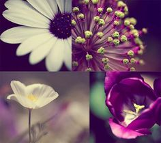 Hey, I found this really awesome Etsy listing at https://www.etsy.com/listing/68635364/bold-purple-flower-photography-print-set