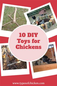 Best DIY ideas for your chickens! Raising Meat Chickens, Types Of Chickens, Pet Chickens, Diy Chicken Toys, Chicken Home, Backyard Chicken Coops, Backyard Chickens, Chicken Roost, Chicken Feeders