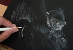 In this work-in-progress by Sandra Angelo, you can see how she uses black paper for this subject to create a dramatic rendering. ~ch