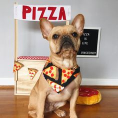 Problems come and go, but pizza is forever! Vince the French BulldogPuppy ( Bulldog Rescue, Rescue Dogs, All Dogs, Dogs And Puppies, Doggies, Cute French Bulldog, French Bulldogs, Cute Dogs, Cute Babies