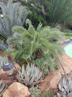 Alberton home. African Plants, South Africa, Heaven, Feb 2017, Female, Gardens, Environment, Home, Sky