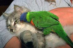 Foto gatti divertenti: strane amicizie e adozioicon altri animali