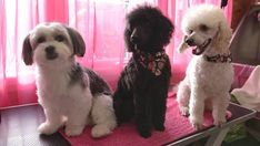 If you are looking for the best Dog Grooming in Cornwall then look no further than Tammy's Dog Grooming. To know more about their services feel free to visit their website or contact them. Dog Grooming, Cornwall, Best Dogs, Website, Free