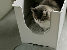 Cat going in the Flip Cat Litter Box