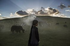 Tibetan Plateau, July 2015 Photographs by Kevin... - fotojournalismus