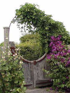 Great idea to add drama to a gate - I would love to see it with the vine all the way over the arch.