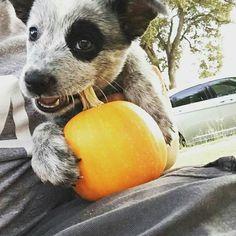 Molly loves her pumpkin..