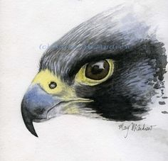 """""""Peregrine Falcon"""" watercolor by 'Mary McAndrew - - -  'Paintress'"""