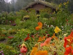log cabin and wildflowers ...