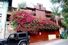 "Jim Morrison's ""Love Street"" house in Laurel Canyon"
