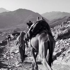 From a trip to Egypt   #sinaimountains#egypt #camel #bedouin