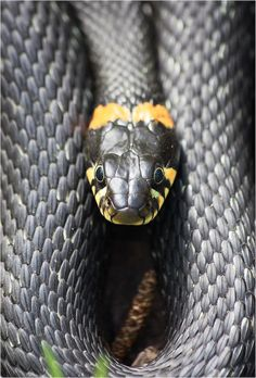 I hear snake bites are a fast way to die