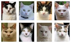 Aliens among us. These cats were marked as human by a face-detection algorithm.