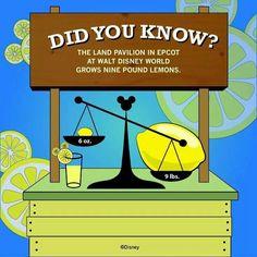 9lbs Lemons