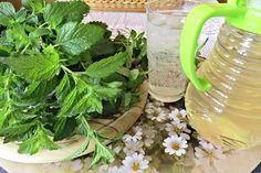 Meduňka má léčivé účinky, doporučuje se například při nespavosti. Sirup vyrobený podle tohoto návodu mícháme se studenou vodou nebo vychlazenou minerálkou a ledem nebo můžeme tímto sirupem ochutit čaj. Celery, Healthy Lifestyle, Herbs, Vegetables, Gardening, Food, Syrup, Lawn And Garden, Essen