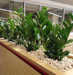 indoor planter box ideas - Design Decoration