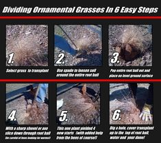 how to ornamental grass