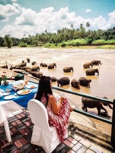 Sri Lanka a great destination for romantic honeymoon with intimate life experience shared together.