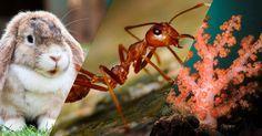 Comme le fait de se nourrir ou de respirer, la reproduction est essentielle à tous les êtres vivants. Mais chez chaque espèce, elle dépend de son évolution, mais aussi d'une grande variété de critères très divers. SooCurious vous...