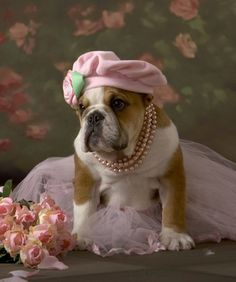 I absolutely love this picture of an English Bulldog in pearls and a cap.  #puppied