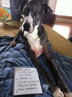 Dog Shaming - I steal bottle nipples and hide them in the couch cushions