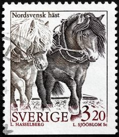 North Swedish Horses - a small heavy horses originating in Sweden, stamp printed by Sweden ,circa 1994